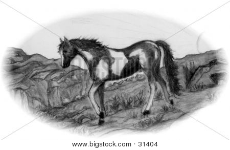 Horse On The Trail Drawing