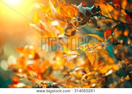 Autumn colorful bright Leaves swinging in a tree in autumnal Park. Autumn colorful background, fall backdrop. Backlit, sun flare. Beautiful nature scene. Park