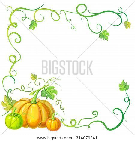 Autumn Frame With Pumpkins And Vines, Leaves And Place For Text. Thanksgiving, Halloween Or Corn Fes