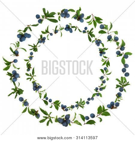 Abstract sloe berry wreath on white background also known as blackthorn. Pruna spinosa.