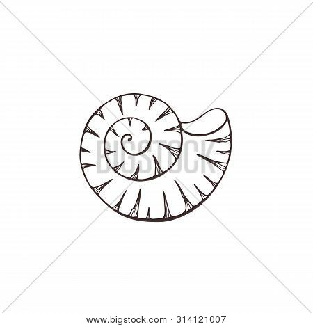 Hand Drawn Sea Shell. Vector Illustration. Shellfish Outline Isolated On White Background.