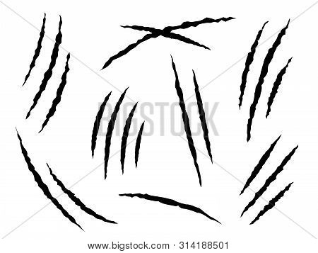 Claws Scratches. Claw Marks, Dangerous Or Tiger And Cat Animals Scratch. Damaged Paper Tracks, Dange