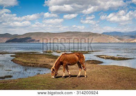 Horse In Napa Lake Grassland At Shangri-la Yunnan