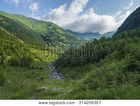 Beautiful Mountain Landscape With Stream Smrecianka Creek Grass, Spruce Trees, Dwarf Scrub Pine And