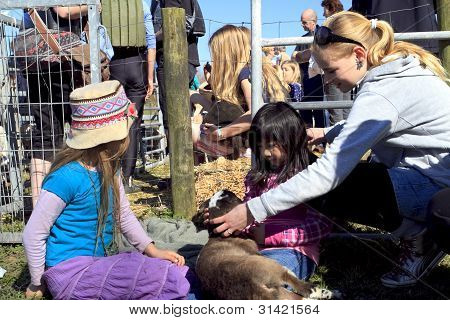 Children Holding And Stroking A New Born Lamb