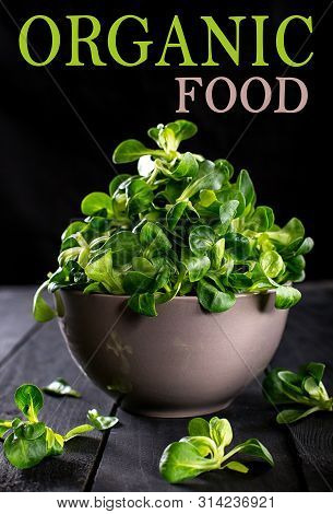 Corn Salad Or Lettuce Isolated On Darck Background