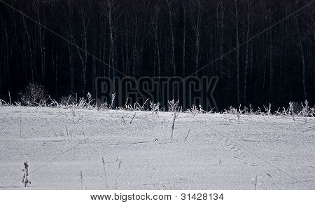 Winter field with a forest behind
