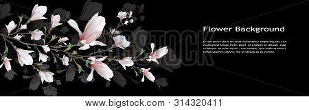 Realistic Flower, Magnolia Branch Isolated On Black Background. Magnolia Imvol Spring, Summer, Femin