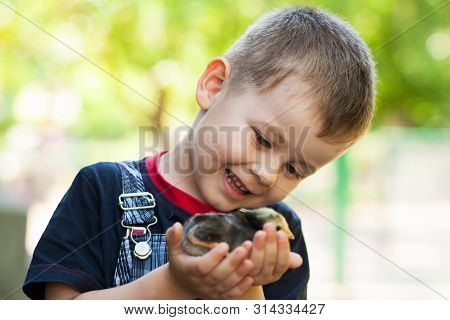 Little Boy Holding A Baby Chick On A Farm. Concept Of Happy Life.