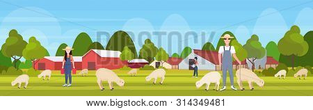 Shepherd With Stick Herding Flock Of White Sheep Farmers Team Breeding Sheep Eco Farming Wool Farm C