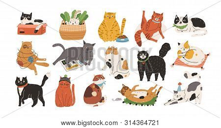 Bundle Of Adorable Cats Sleeping, Stretching Itself, Playing With Ball Of Yarn, Hiding In Box Or Bas