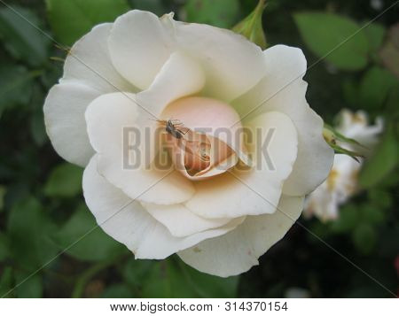 Flowers Garden Nature Beauty Wonder Miracle A Life