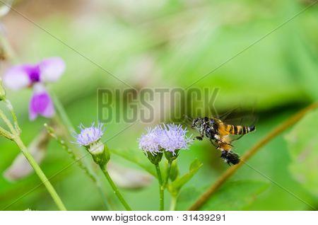Wasp Macro In Green Nature Or In Garden