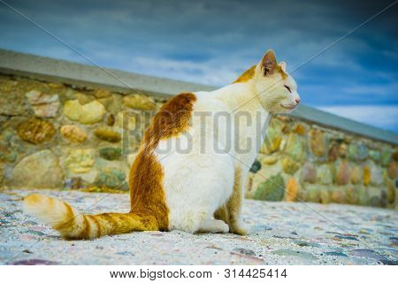 Beautiful undomesticated feral cat in white and red ginger orange colors. Close up of pretty animal kitty. poster