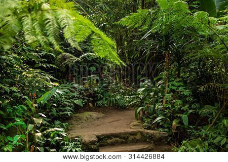 Walking Trail In Tropical Forest. Tropical Forest Landscape. Asian Tropical Rainforest. Lush Green V
