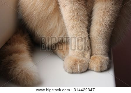 Paws And Tail Of A Red Cat That Sits On The Windowsill Close-up. Pet Cat.