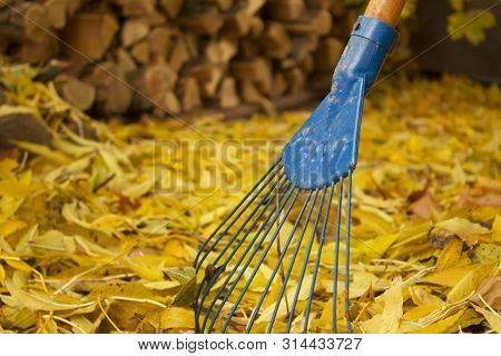 poster of Pile of fall leaves with fan rake on lawn close up
