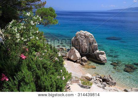 Dalmatia Adriatic Coast With Oleander Flowers. Croatia Coast Landscape. Beaches And Coast Of Mimice.