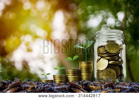 Money Savings, Investment, Making Money For Future, Financial Wealth Management Concept. A Coins In