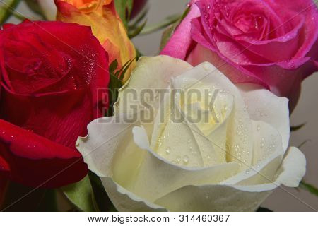 Flowers, Bouquet Of Fresh Roses Of Various Colors