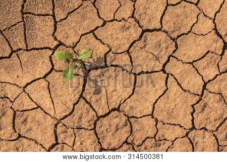 Little Green Plant Growing Up In Dried Desolate Land Or Dry Areas. Top View With Copy Space. Hopes A