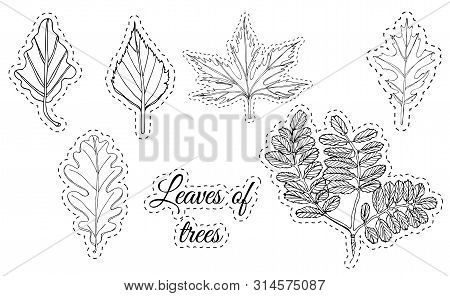 Collection With Monochrome  Leaves Of Trees.  Hand Drawn Ink Sketch Isolated On White Background. Ve