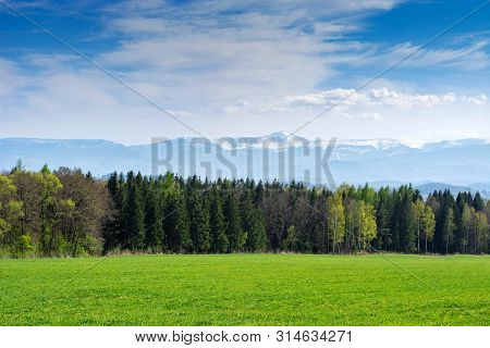 Spring Landscape. Field Of Sown Oats, Forest And Mountains.