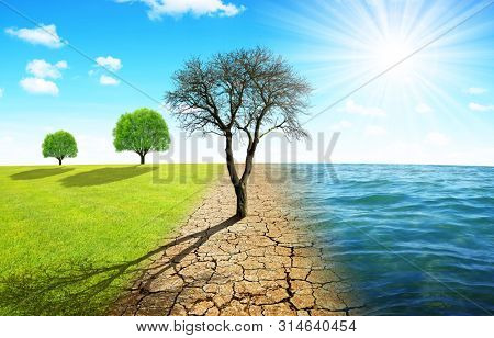 Dead tree in dry country with cracked soil and meadow with sea. Concept of change climate or global warming.