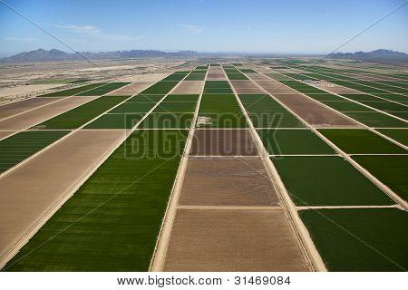 Casa Grande Farmland