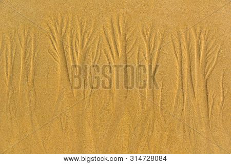 Woods  In The Sand , Nature Designs ,  Natural Art