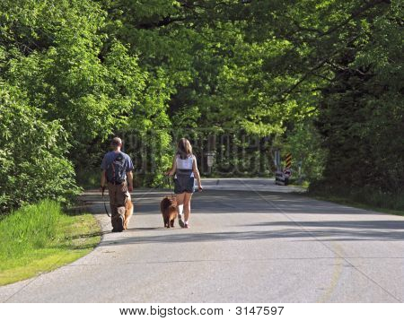 poster of Young couple walking their dogs on a nice morning in the park. A great way to work out!