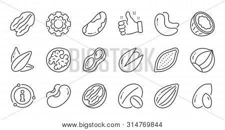 Nuts And Seeds Line Icons. Hazelnut, Almond Nut And Peanut. Sunflower Seeds, Brazil Nut, Pistachio I
