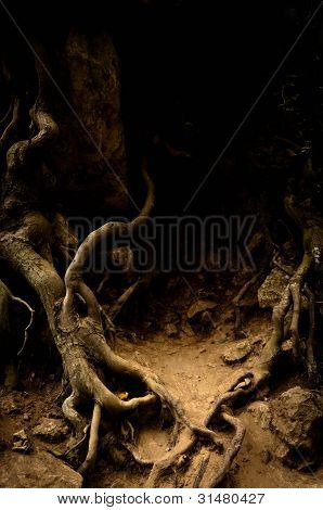 Roots Of An Ancient Tree