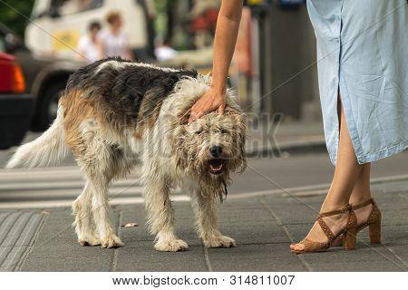 Woman Cuddling Stray Dog On The Street Attractive Woman Cuddling Dog On Street. Close Up Of Stray Do