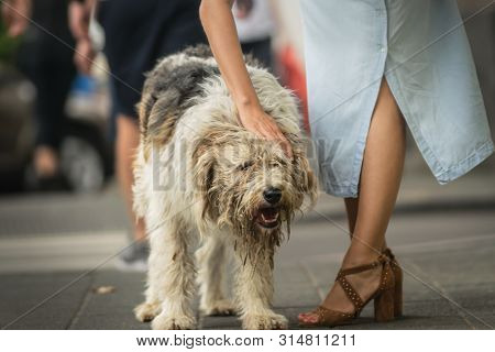 poster of Woman cuddling stray dog on the street Attractive woman cuddling dog on street. Close up of stray dog. Stray dog animal. Stray dog portrait. Beautiful dog. City dog life.