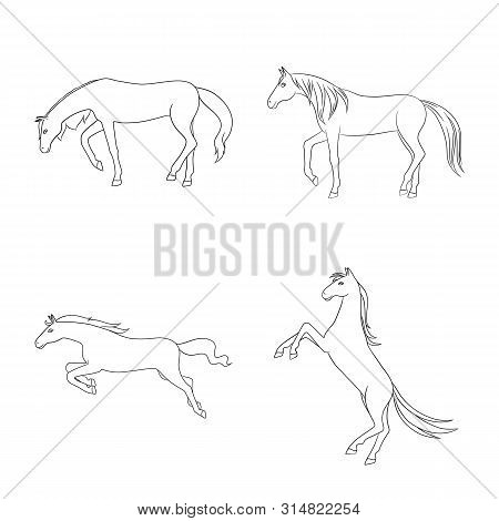 Vector Illustration Of Stallion And Galloping Symbol. Set Of Stallion And Riding Stock Symbol For We