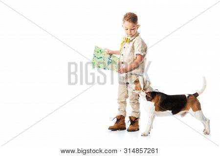 Full Length View Of Explorer Child Holding Map And Looking At Beagle Dog Isolated On White