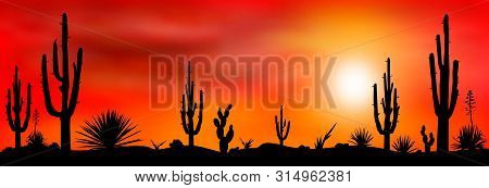 Sunset In The Mexican Desert. Silhouettes Of Cacti And Other Plants Of Stony Desert Against The Back