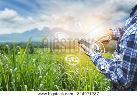 Innovation Technology For Smart Farm System, Agriculture Management, Hand Holding Smartphone With Sm