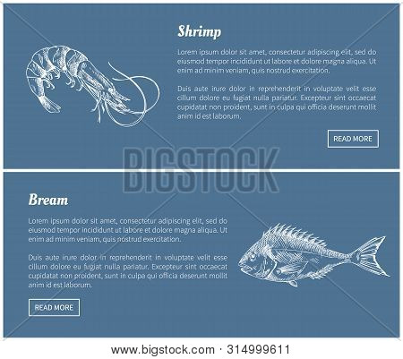Schrimp And Bream Marine Products Vector Illustrations In Sketch Style. Dark Blue Landing Page With