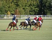 polo players in the action of a match poster