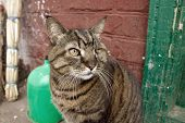 Homeless cat with one eye. Street cat without eye. Street tramp cat. A lonely homeless animal poster