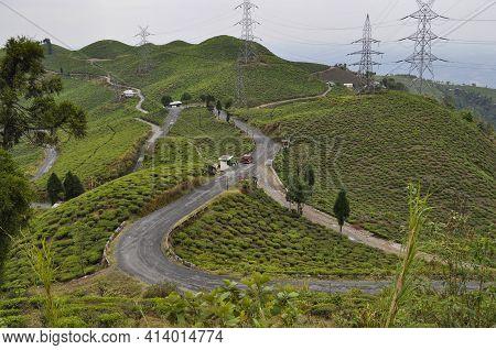 Organic Tea Garden Spans Across A Slope, Grown In The District Of Darjeeling.
