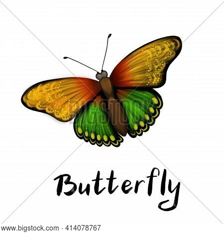 Beautiful Decorative Butterfly On A White Background With The Inscription Butterfly. Color Butterfly