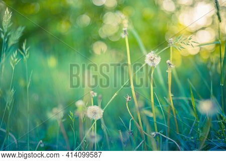 Spring Nature Scene. Beautiful Meadow Landscape. Park With Green Grass, Blurred Trees And Flowers. T