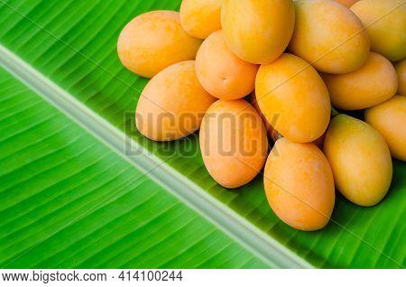 Marian Plum Or Ma Yong Chid (in Thai Language) Which Looks Like Plum But Taste Like Mango On Banana