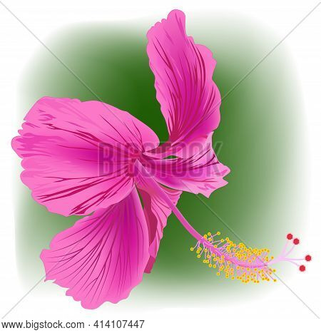 Close-up Image Of A Hibiscus Flower In Magenta - Vector Illustration