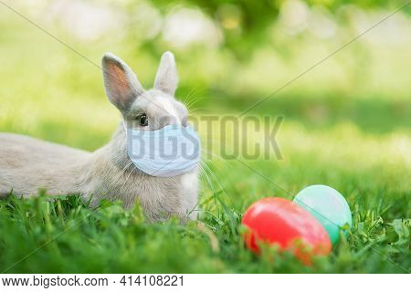 Easter Bunny In Medicine Mask And Eggs On Spring Green Grass. Cute Rabbit. Easter Egg Hunt With Pet