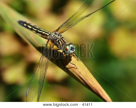 Dragonfly (view 1)
