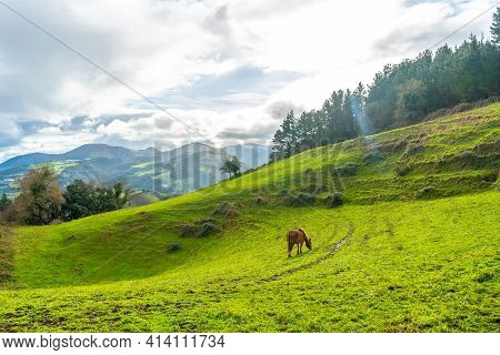 Sunrise With A Wild Horse On Mount Arno In The Municipality Of Mutriku In Gipuzkoa. Basque Country,